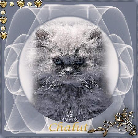 chalut